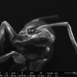 Ameisenkopf  -- Bildnachweis: © EuXFEL