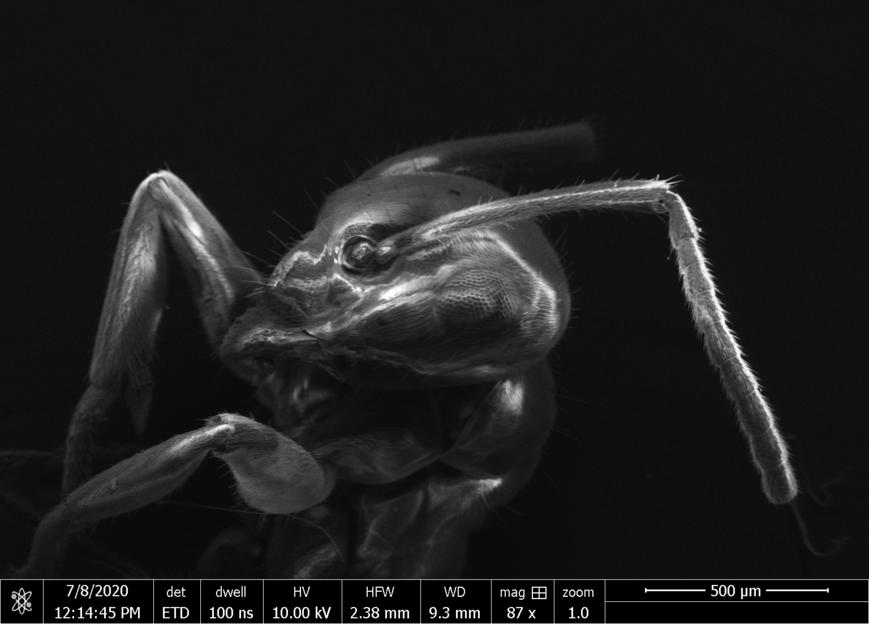 Ameisenkopf  -- Bildnachweis: © EuXFEL Ameisenkopf  -- Bildnachweis: © EuXFEL